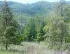 63 Pristine Acres in Mountains, Moravian Falls, NC ID#:15412