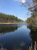 349 Acre Recreation, Timber, Horse Barn, Ponds, Hunting & Cabin, Williston, So. Carolina ID#:33475