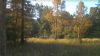 77 Acre Secluded Home Site - Spring - Hunting - Timber Deer Lodge TN ID#:33656